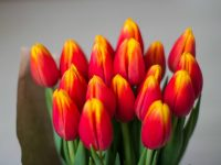 Врачам и учителям могут разрешить принимать в подарок только цветы и канцтовары