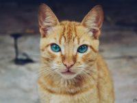 В Курске двое благотворителей изнасиловали волонтера за смерть VIP-кота