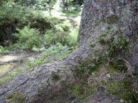 В подмосковном лесу нашли труп мужчины, прикованный цепями к дереву
