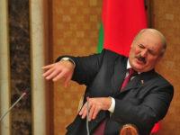 «Ложатся и умирают». В Беларуси дохнут свиньи — от голода