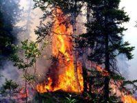 Площадь лесных пожаров в РФ за сутки выросла на 8 тыс. гектаров