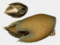 Родственник «необычной креветки», похожий на корабль Хана Соло